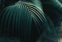 Vert foncé - Dark green