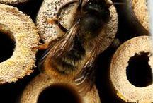 Bee Gentle / Featuring the gentlest bees... #Masonbees :)