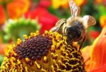 Bee Concerns / Many problems plague the bees of the world. Here are some news or info we think you should know about. We hope you make the right choices regarding #bees :)