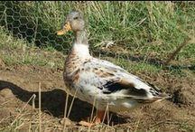 Ducks / by James Overman