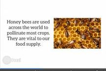 Bee-ing with Crown Bees / See what we do and what kinds of views we have :)