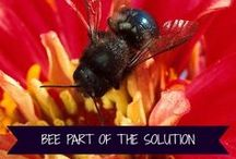 Bee-Buy-Back Program / It's time to harvest your mason bee cocoons and help spread them around for other gardeners. Go to http://crownbees.com/beebuyback/ to learn about sharing your bees and harvesting. We will buy back your #bees or give you free nesting material!