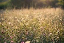 Sommer / Summer / Sommer Dekoration, Garten, Natur, See, Meer Fotografie sonnig, farbenfroh, fröhlich, Ideen und Inspiration im Sommer.