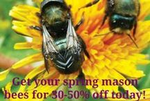 Spring Bee Bliss / We're having our sale on spring #masonbees, a brand new BeeBungalo kit, and other accessories for the #gardener and #beelover. Sale ends April 7.