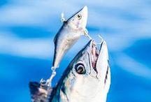 Seafood Hook Up