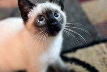 Cats / Cutie!!!!