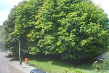 Cypresstraat buiten
