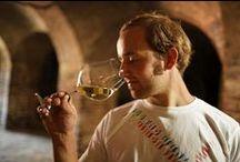 """Gottfried Lamprecht : Die """"echten"""" Wurzeln der Steiermark / In dieser Sendung stelle ich Ihnen steierische Weine vor. Zusammen mit dem Winzer und Macher Gottfried Lamprecht vom Herrenhof Lamprecht verkosten wir ursprüngliche Rebsorten aus der Region! http://lamprecht.vinovademecum.com"""
