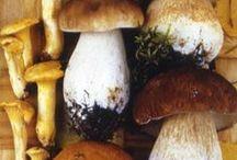 Mushrooms / Mushrooms all over the world - sieniä kaikkialta maailmasta