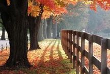 All Things Autumn !!! / The beauty of God's creation!