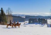 Winterreiten & Pferdeschlitten im Mühlviertel / Das weitreichende Reitwegnetz im Mühlviertel führt Sie über schneebedeckte Hügel & winterliche Täler. Mit dem Pferdeschlitten ab durch die verschneite Landschaft und den Weitblick genießen.