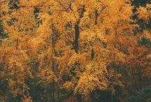 [woods]