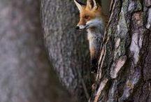 Animals: Forest