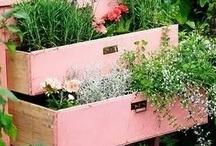 Garden ideas / by Kelly Ann