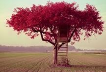 Tree House envy / by Kelly Ann