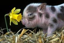 Piggies / by Kelly Ann