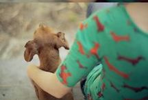 CUTE PUPPY DOGS / by Jamie Bartlett