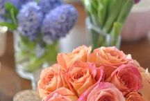 Spring Showers / Everything I love about spring easter baby showers and bridal showers.  New beginnings.  10 pins per visit. Happy Pinning / by Lia Skinner