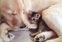 CUTE CAT & DOG ♥