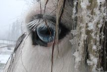 soul readers / Only one look straight to your eyes is enough for a horse to read your soul !!!