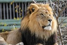 Pride of the Plains / by Sedgwick County Zoo