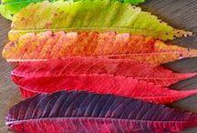 Paula Jones Fine Art- Color