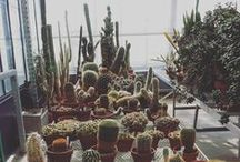 Cacti Aesthetic / Minimalist, white with turquoise accents