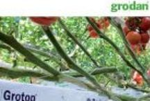 Brochures - Hydroponic Horticulture Products / Grodan Substrates, plugs, blocks