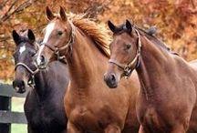 I LOVE HORSES / LOVAK LOVAK LOVAK!