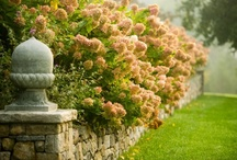Garden Details / by Miguel XdE