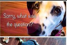 ☑️ Dalmatian DOG