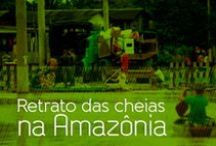 Cheias na Amazônia 2014