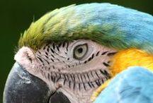 #minhaamazonia / Imagens sobre a Amazônia enviadas por nossos internautas. Envie a sua para o e-mail: minhaamazonia@portalamazonia.com ou marque sua foto com #minhaamazonia