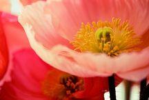 I ❤ flowers