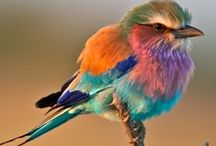 Beautiful Birds / Colourful birds I wish I could see everyday.