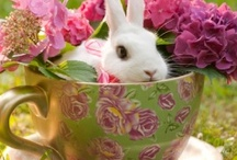 ~ Easter-Spring...the season of new beginnings ~ / (Please pin respectfully) / by Judy Shoup