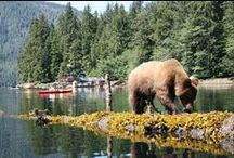 ~ Our Travels...Canada ~ / Prince Rupert and the Pacific Northwest.   (Please pin respectfully) / by Judy Shoup