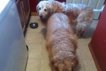Furry Friends / We just love our furry animals. They bring joy and love to everything we do!