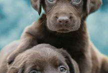 PUPPIES / love puppies ❤️
