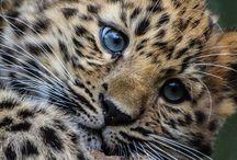 Animals! / love animals ❤️