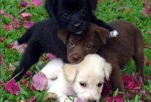 Doggies / I Love Doggies... Best friend, loyal, loving, good listener, always happy, healer, best therapy around...etc etc etc... / by Skye