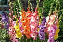 Flowers ازهار / Flowers planets ازهار ونباتات / by Dr. Marwan Haddad