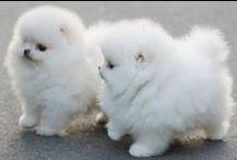 puppylove.