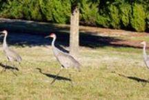Lake County Florida Wild Life