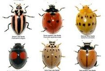 Insect Fun Facts / The world of insects is filled with super cool and interesting creatures that do fascinating things.