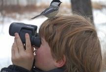 Birdwatching  / Venha voar connosco ao encontro da natureza