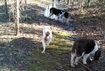 Dog Walking / All Things about Walking Dogs (After all, we are professional dog walkers)
