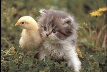 kotki i koty / koty domowe i dzikie