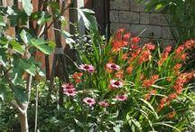 tuin / Ik maak graag foto's van mijn tuin en gekochte bloemen.