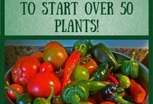 Grow Your Own Food! Save Money by Gardening! / Tips and ideas for growing indoor herbs and spices, so I can have fresh ingredients all year long!